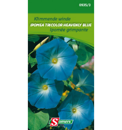 Somers Ipomea Tricolor Heavenly Blue