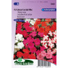 Impatiens F2 Colour Cocktail BLOEMEN EENJARIG