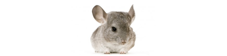 Chinchilla/Degu